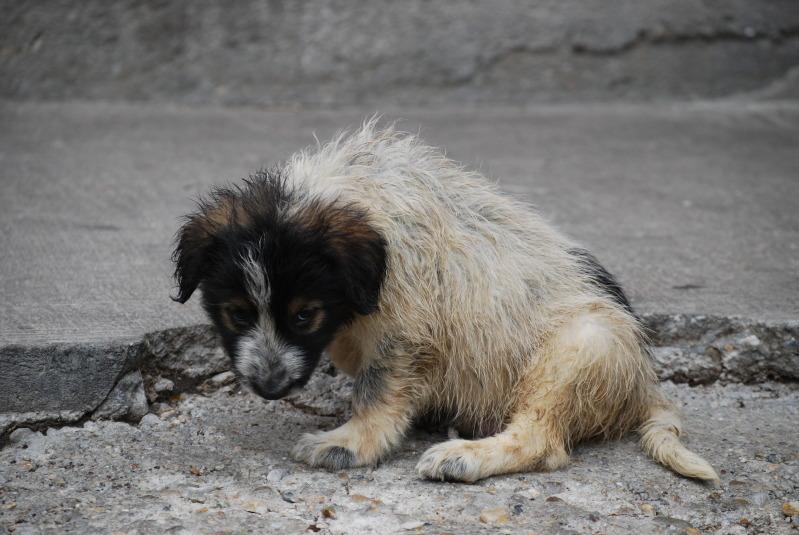 Spot, né en avril 2012, abandonné à l'âge de 3 semaines D004cdc2