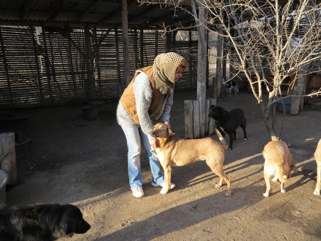 Tzupy, chien de notre quartier, mâle très sociable, né en 2009. IMG_1753_zpsa5f25b3c