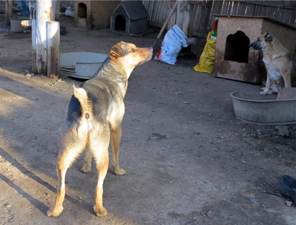 Zeus, né en janvier 2012 IMG_17602_zps777f979a