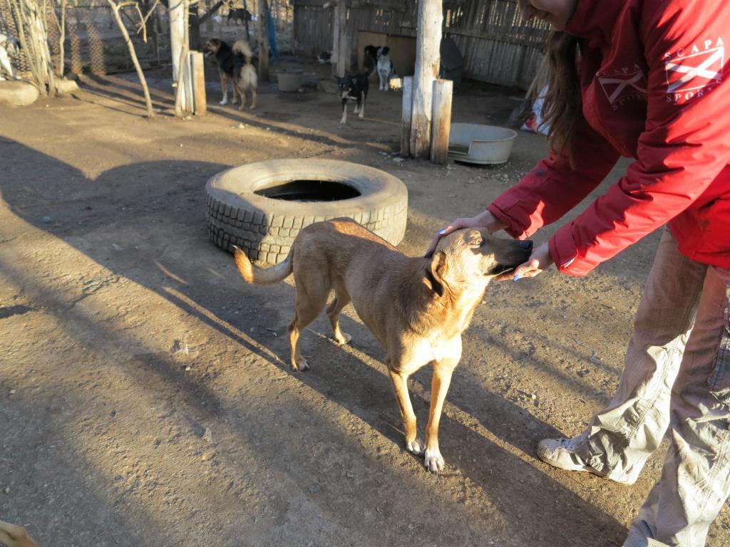 Tzupy, chien de notre quartier, mâle très sociable, né en 2009. IMG_1805_zps432e06cb