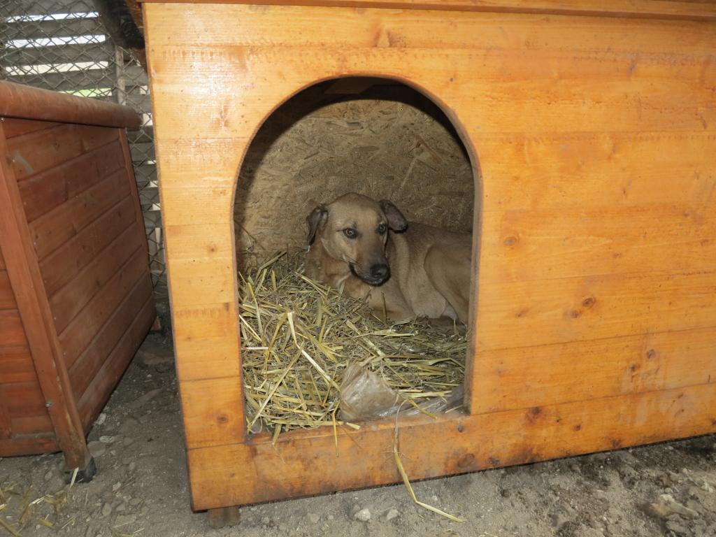 Tzupy, chien de notre quartier, mâle très sociable, né en 2009. IMG_2301_zpscf7199f0