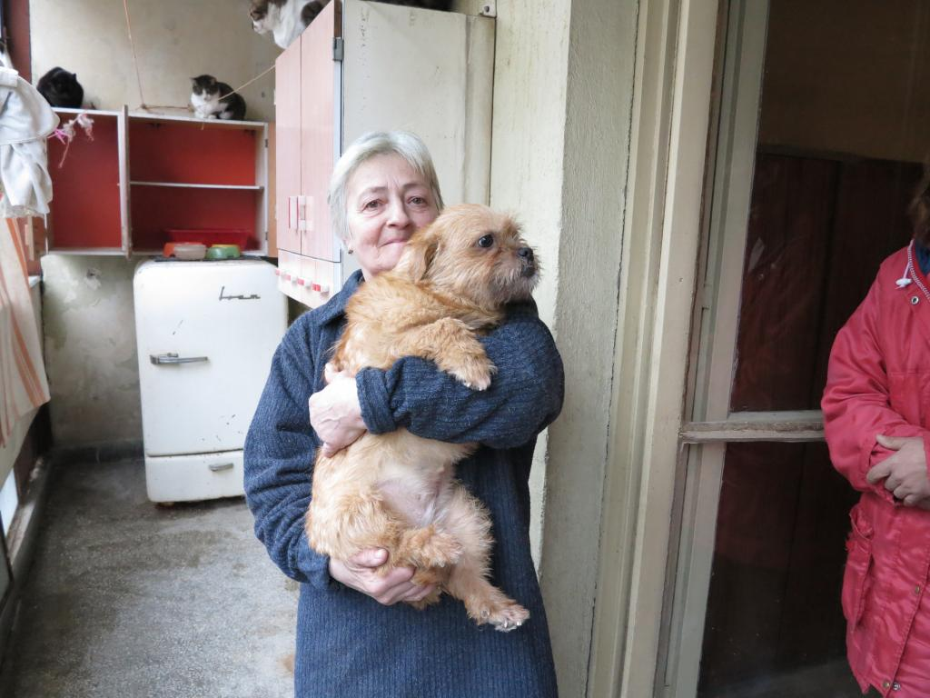 Yvona, née en 2011, petit modèle, chienne super sage IMG_2705_zps222593c2
