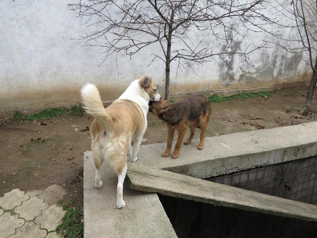 Murmurica, sauvetage de Sanda, chienne née en 2011 IMG_2742_zps382e5ebd