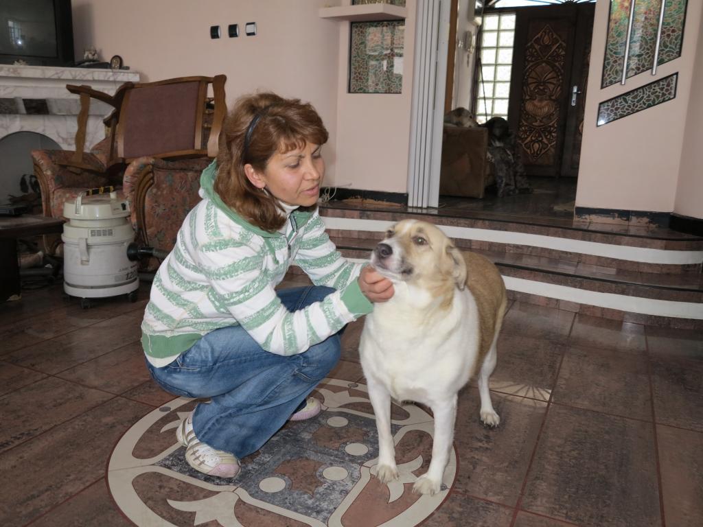 Murmurica, sauvetage de Sanda, chienne née en 2011 IMG_2747_zpsd9493047