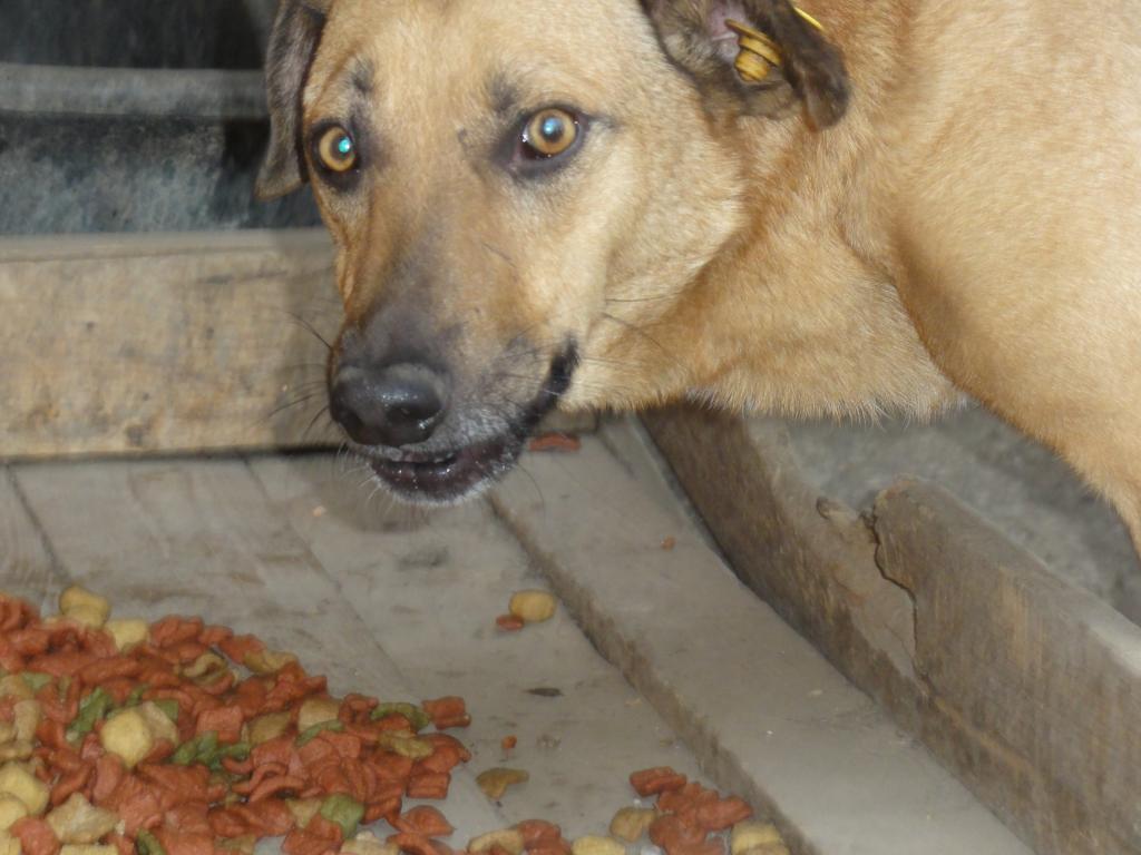 Tzupy, chien de notre quartier, mâle très sociable, né en 2009. DSC00626_zps724037e3