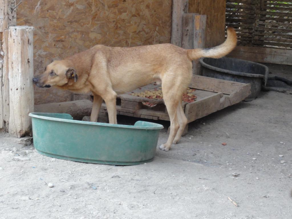 Tzupy, chien de notre quartier, mâle très sociable, né en 2009. DSC00630_zpsc73d7c86