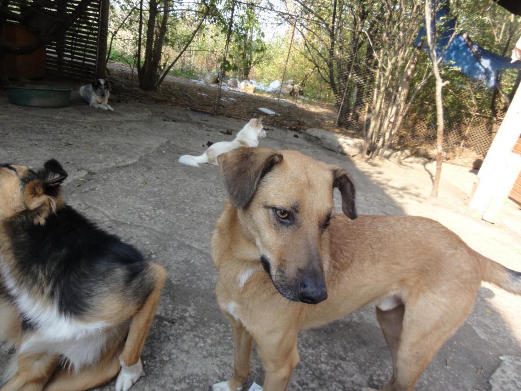 Tzupy, chien de notre quartier, mâle très sociable, né en 2009. DSC00632_zps2bc06f60