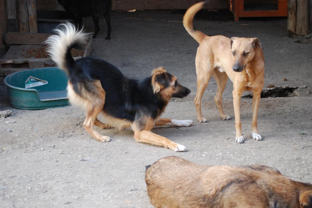 Tzupy, chien de notre quartier, mâle très sociable, né en 2009. DSC_0328_zpse3e6b971