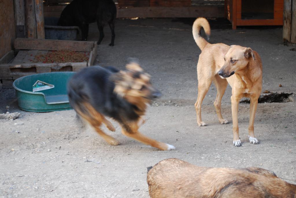Tzupy, chien de notre quartier, mâle très sociable, né en 2009. DSC_0329_zps382bc2a1