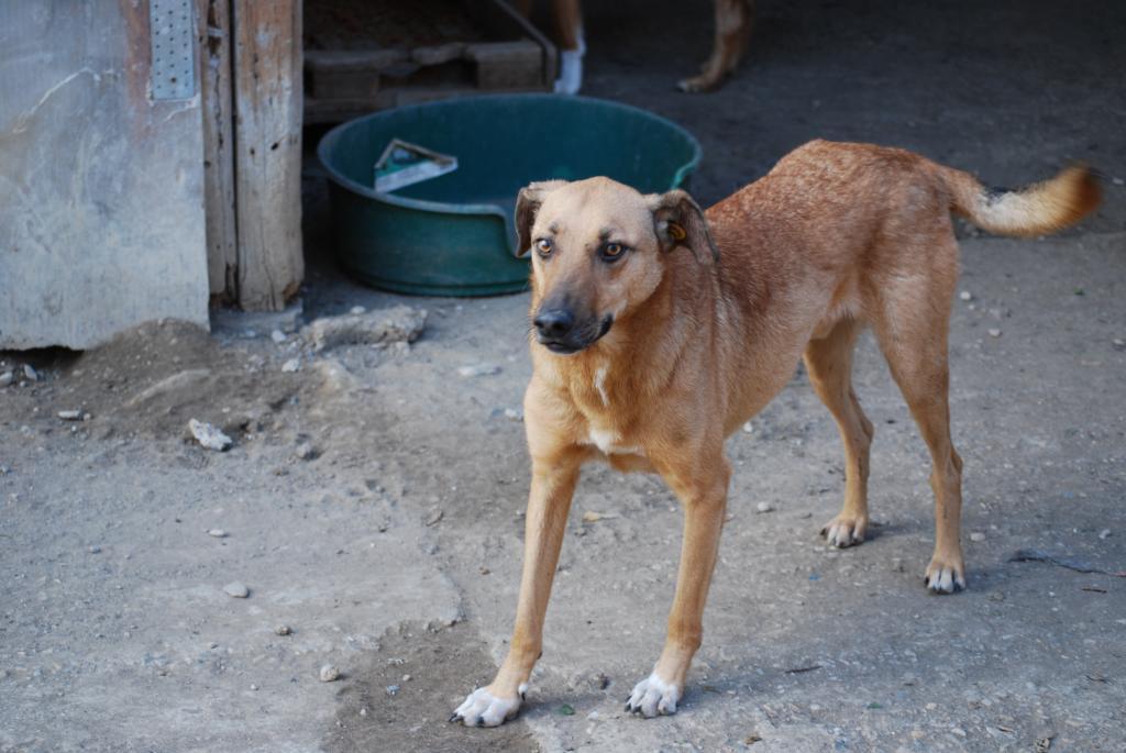 Tzupy, chien de notre quartier, mâle très sociable, né en 2009. DSC_0350_zps8413d0f9
