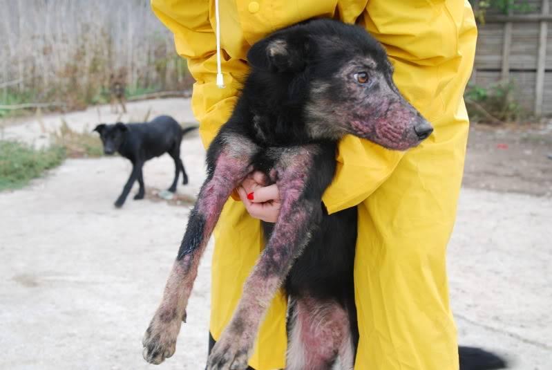 > Mika, un amour de petite chienne, née en mai 2011 - Adoptée 078afdca