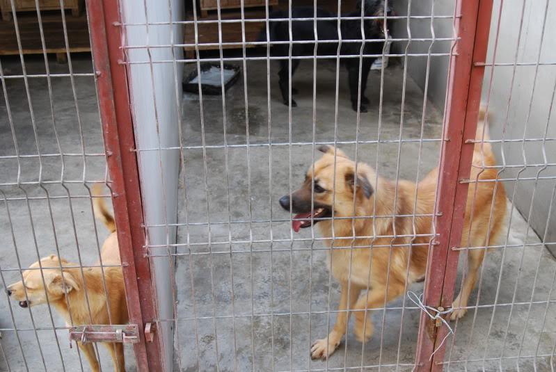 Les chiens d'Adina 12dcb3f5