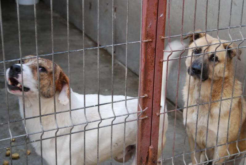 Les chiens d'Adina 18da8849
