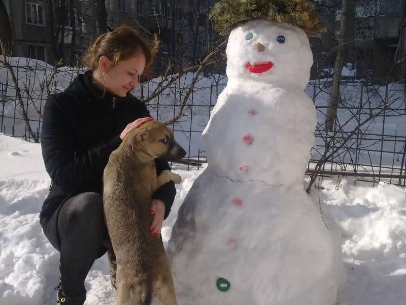 Lila, adorable chienne croisée, née en octobre 2011 21530152