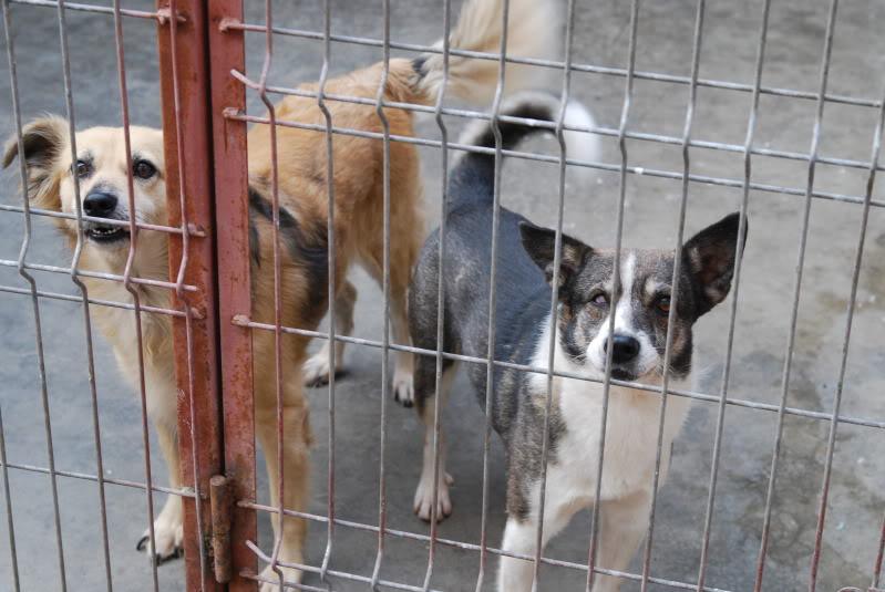 Les chiens d'Adina 23264578