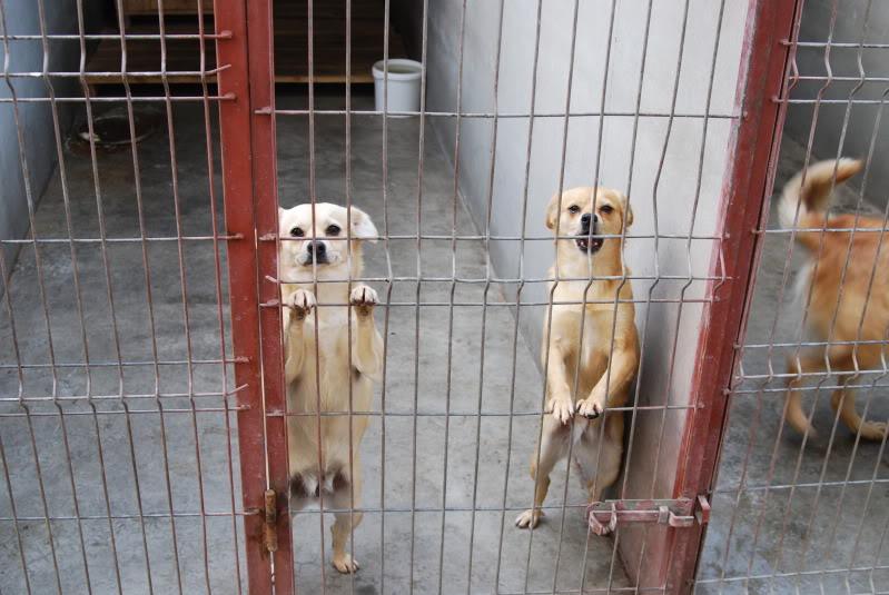 Les chiens d'Adina 27fa2fec