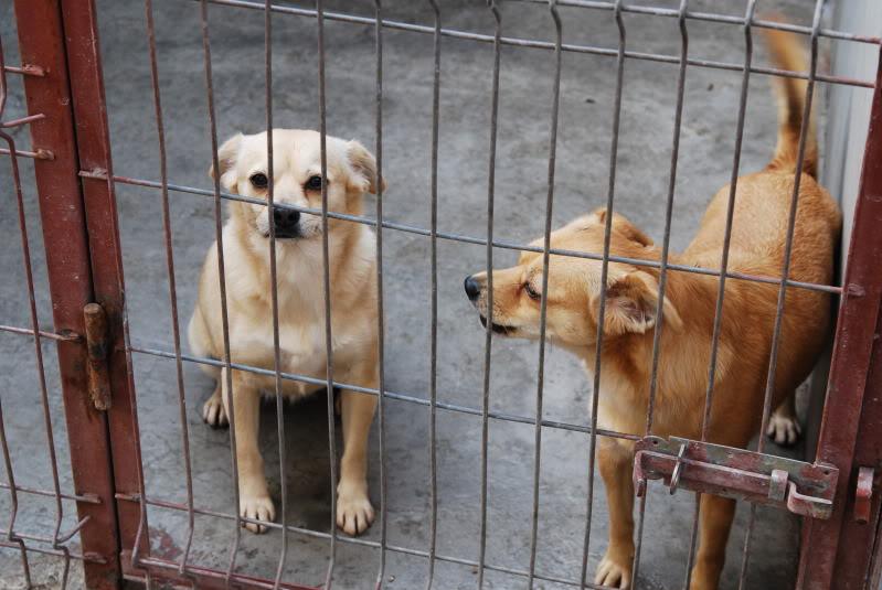 Les chiens d'Adina 2a8abb1b