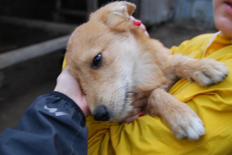 Nino, né en juin 2011, petit bout adorable, abandonné dans la rue  3a658f05