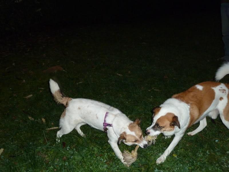 Carla, petite chienne, 1 an et demi  575dc182