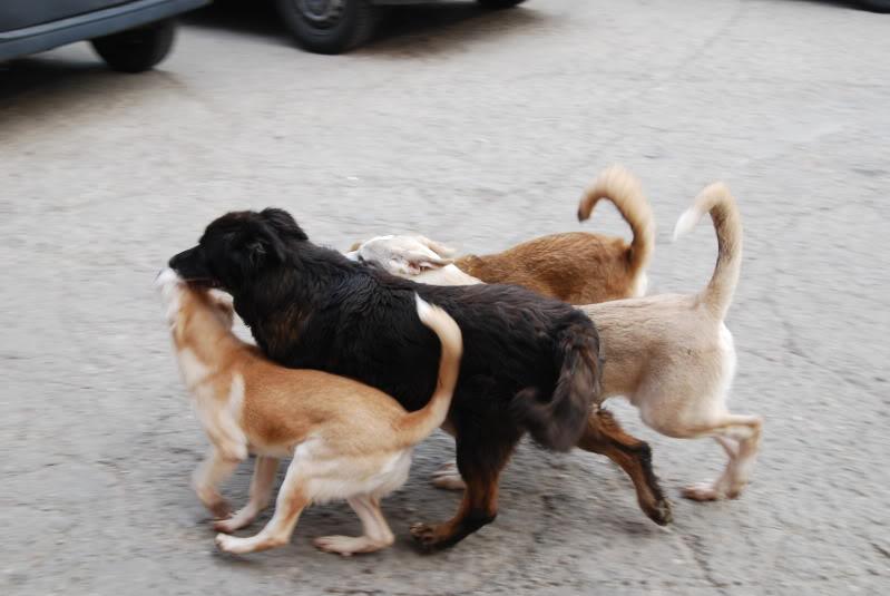 Les chiens d'Adina 61d49e79
