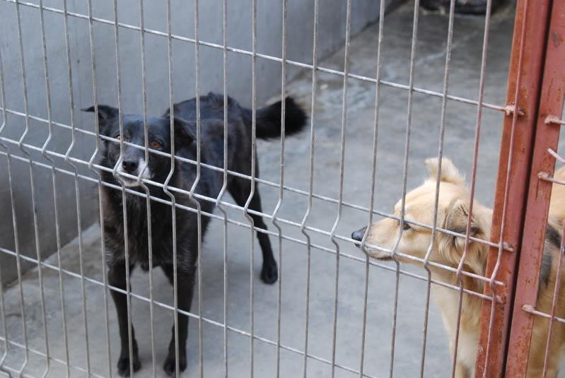 Les chiens d'Adina 6dafe3d5