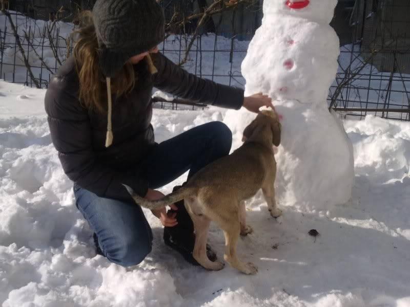 Lila, adorable chienne croisée, née en octobre 2011 70ea841f