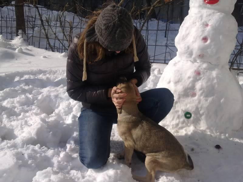 Lila, adorable chienne croisée, née en octobre 2011 7cdddb08