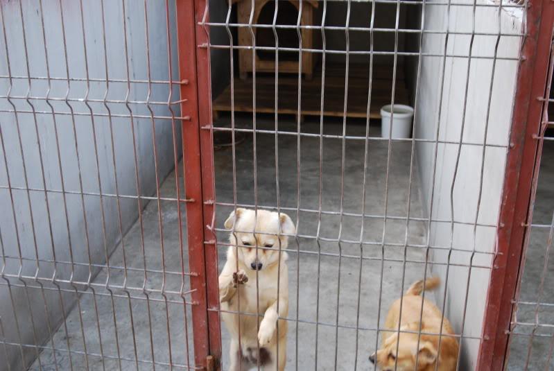 Les chiens d'Adina 89d40078