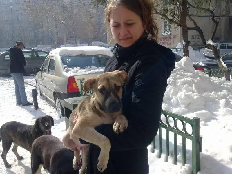 Lila, adorable chienne croisée, née en octobre 2011 94a87701