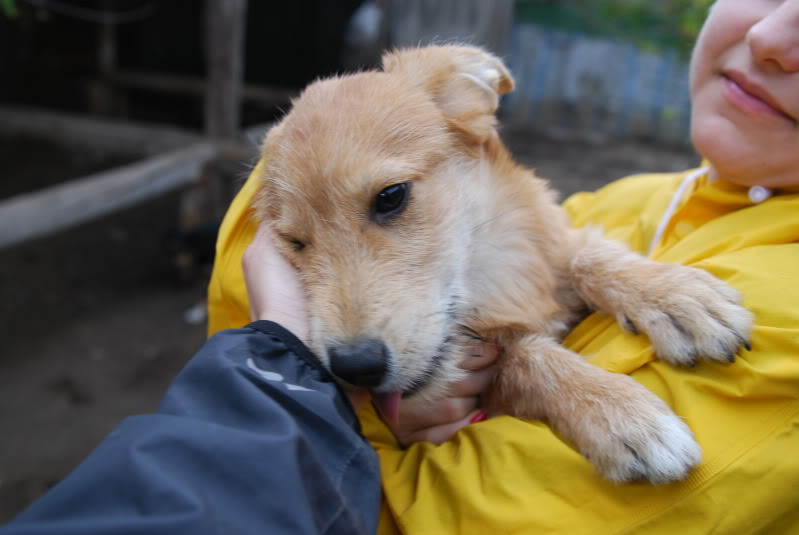 Nino, né en juin 2011, petit bout adorable, abandonné dans la rue  9aadf33a