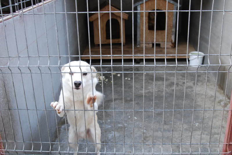 Les chiens d'Adina 9ccd092c