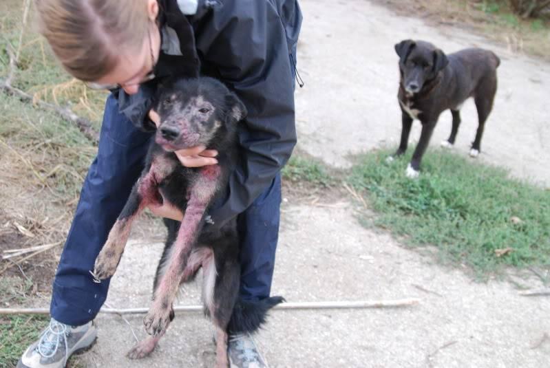 > Mika, un amour de petite chienne, née en mai 2011 - Adoptée A2ba6e1a