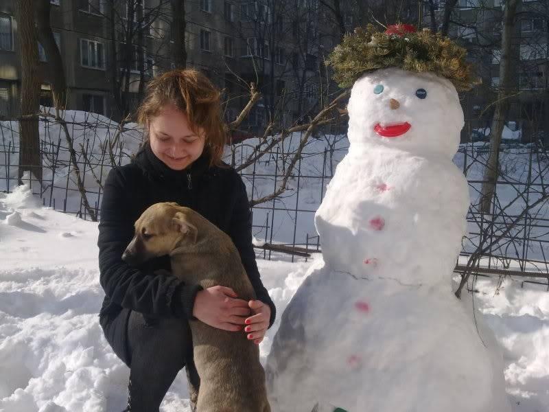 Lila, adorable chienne croisée, née en octobre 2011 A3d62ecd