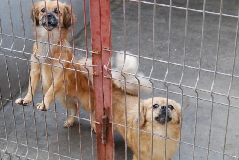 Les chiens d'Adina A5ba18a2