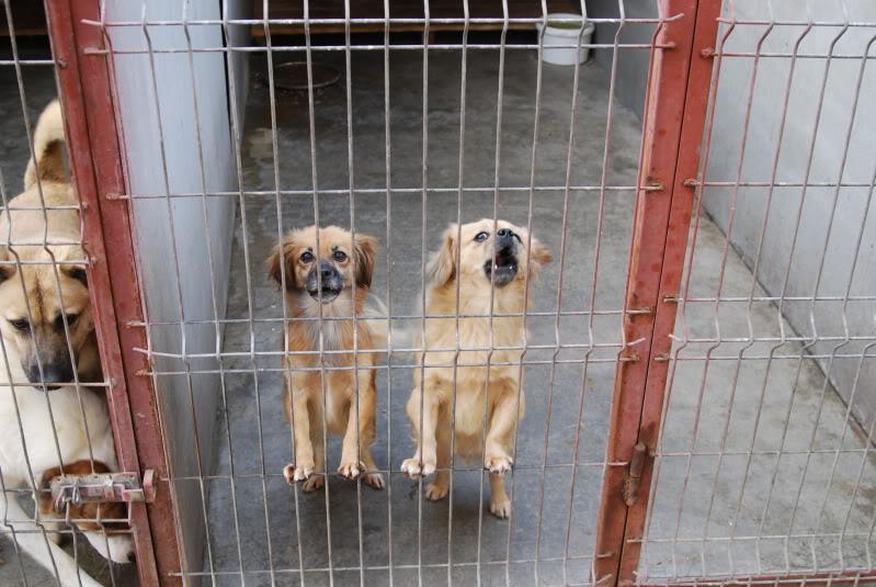 Les chiens d'Adina Cbc47418