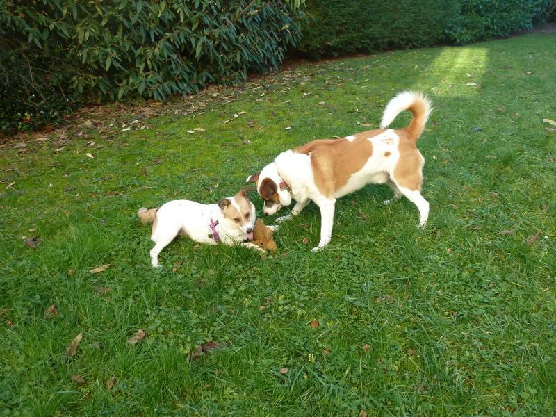 Carla, petite chienne, 1 an et demi  D22f25b7