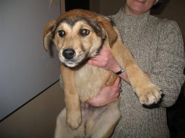 Chippy, chiot male, 3 mois, trouve sur le champ  D371916a