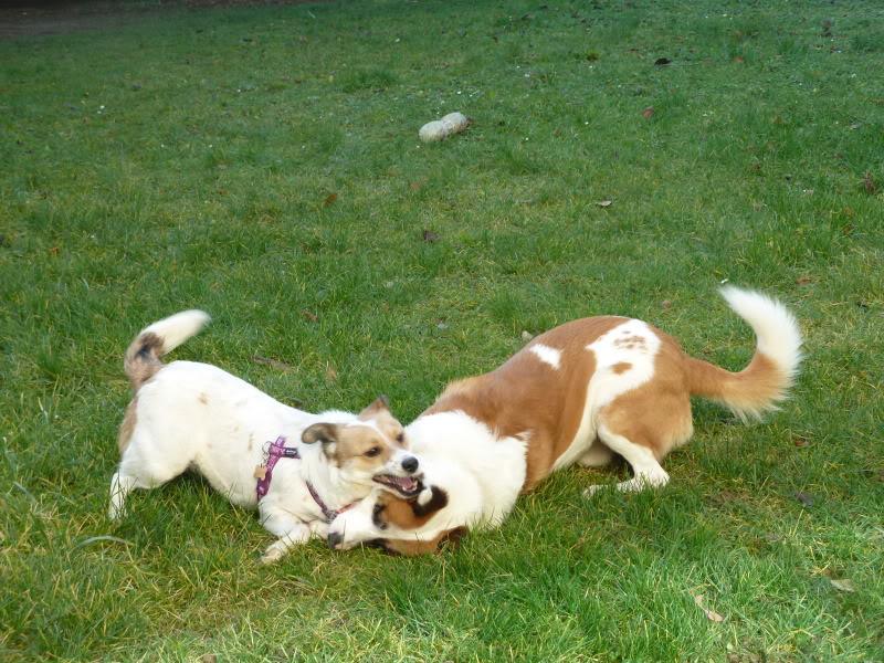 Carla, petite chienne, 1 an et demi  D8d8ab5f