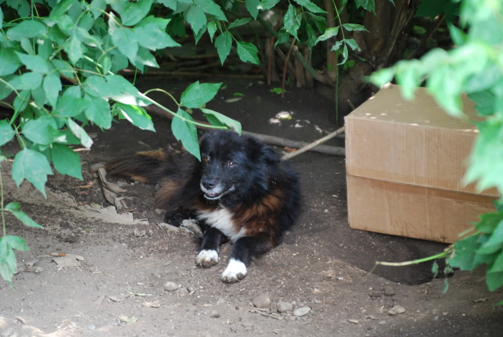Spike, né en 2005, 7kg, très attaché à l'homme  F5ee1b64