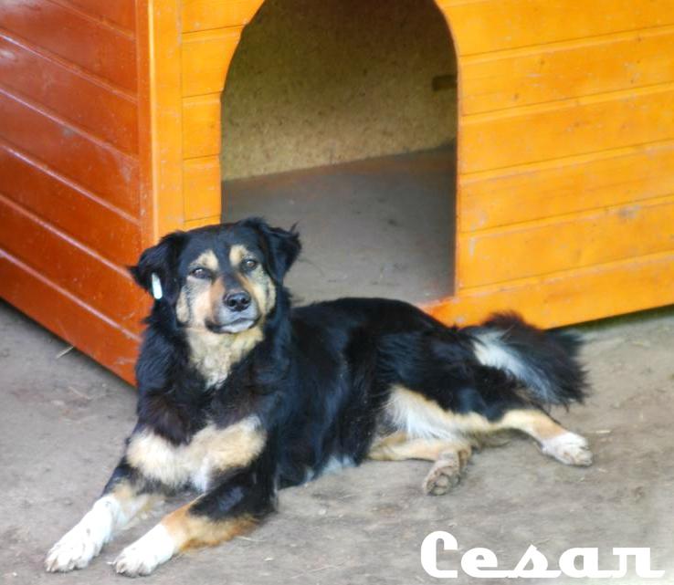 Parrainage de César Cesar_zps49a65e24