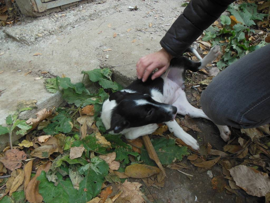 Pepita, née en septembre 2012 DSCN1935_zps1bddd1f5