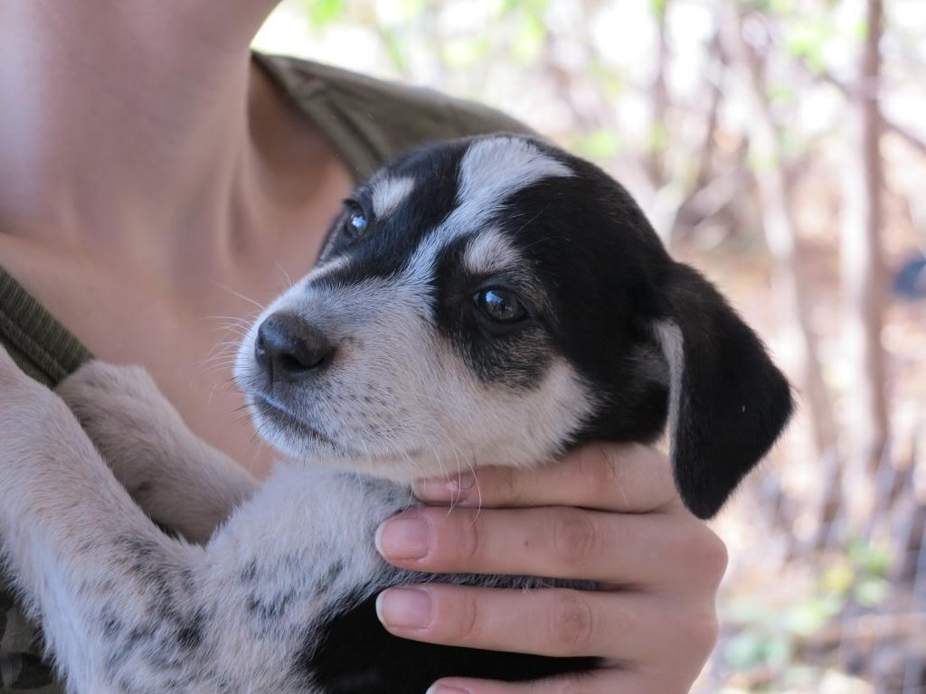 Ricky, petit mâle, né en septembre 2012, abandonné au bord de la route  IMG_2688