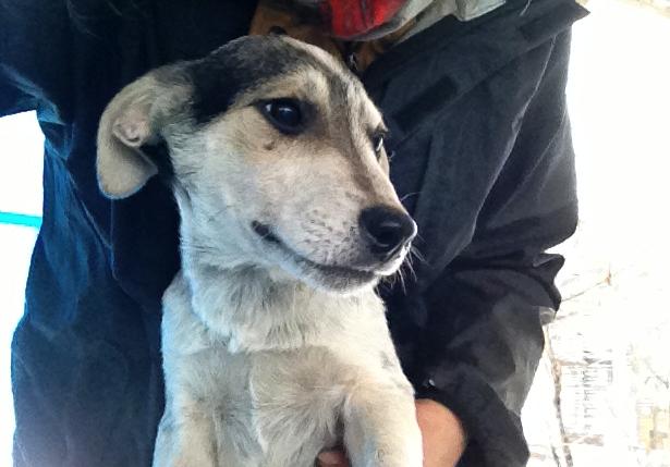 Ricky, petit mâle, né en septembre 2012, abandonné au bord de la route  Image2_zps4ea65a6b