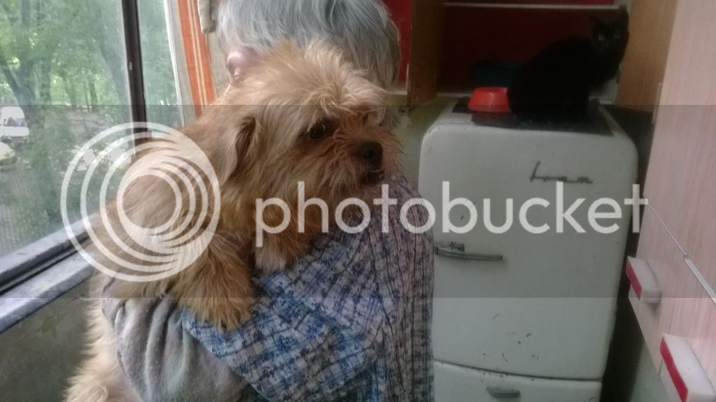 Yvona, née en 2011, petit modèle, chienne super sage WP_20140507_001_zpscd780e95