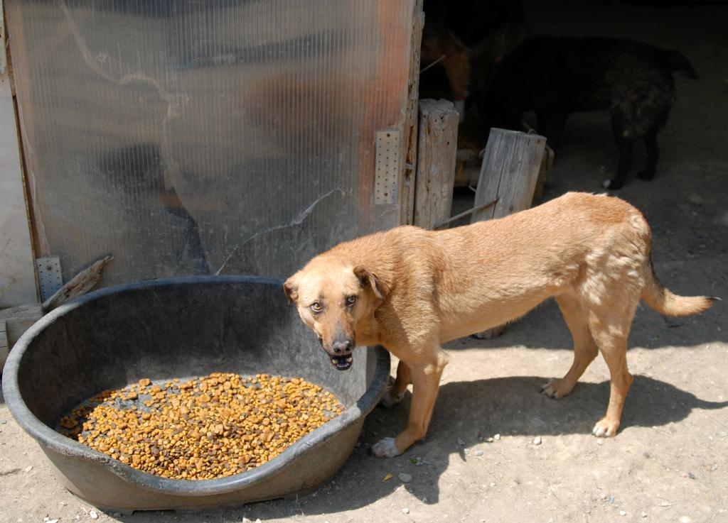Tzupy, chien de notre quartier, mâle très sociable, né en 2009. Bel6_zpsd6a25f6c