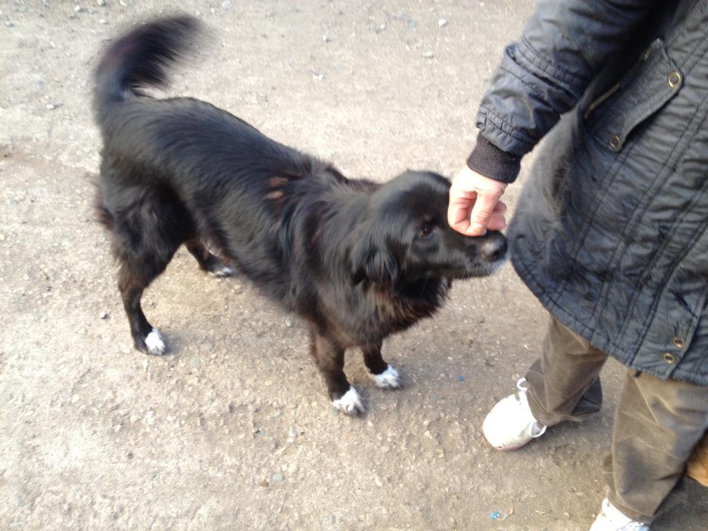 Benny, née en 2003, très sociable et calme - Adoptée 01722b6b21b4ba3929bafb1be60a2eb328611ae5a1_zps9a184372
