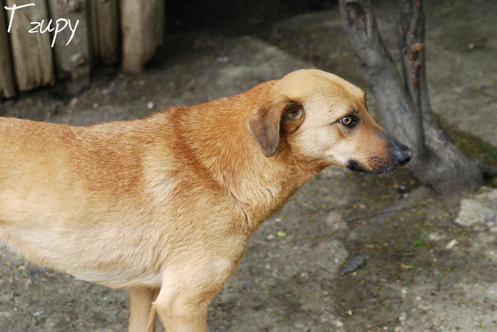 Tzupy, chien de notre quartier, mâle très sociable, né en 2009. Tzupy2_zps60bfbea3