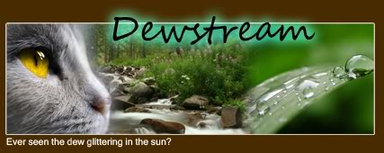 A rainy night... Dewstream