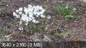 Фотоконкурс «Весна на ладошке». Fb15aaf47d97d7e1fbfb2a6adbb78837
