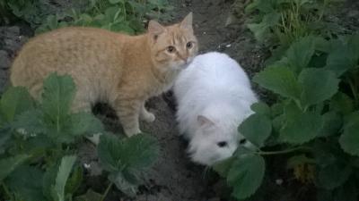 """Фотоконкурс """"Кошки на картошке"""" Df5df5af5c78e5833bc4ce592d891504"""